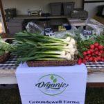 Groundswell farm
